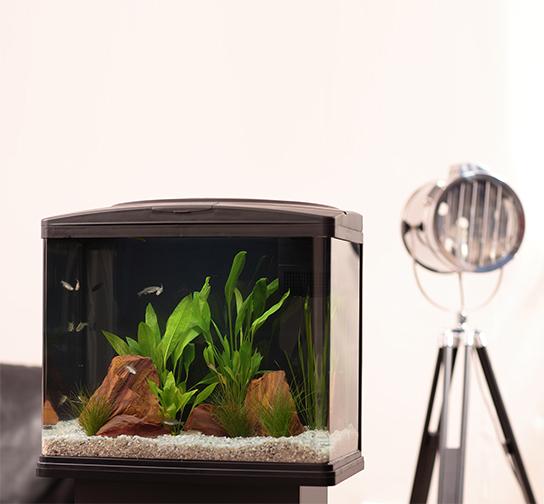 How to treat internal bacteria in aquarium fish pond for Aquarium fish calculator
