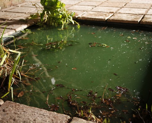 Seasonal pond maintenance guide pond aquarium problem solver for Koi pond maintenance near me