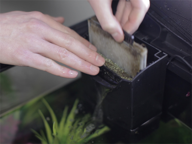 Man removing a white fabric cartridge from an aquarium filter