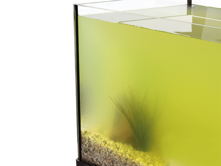 Corner of a glass aquarium filled with cloudy, green water obscuring contents.