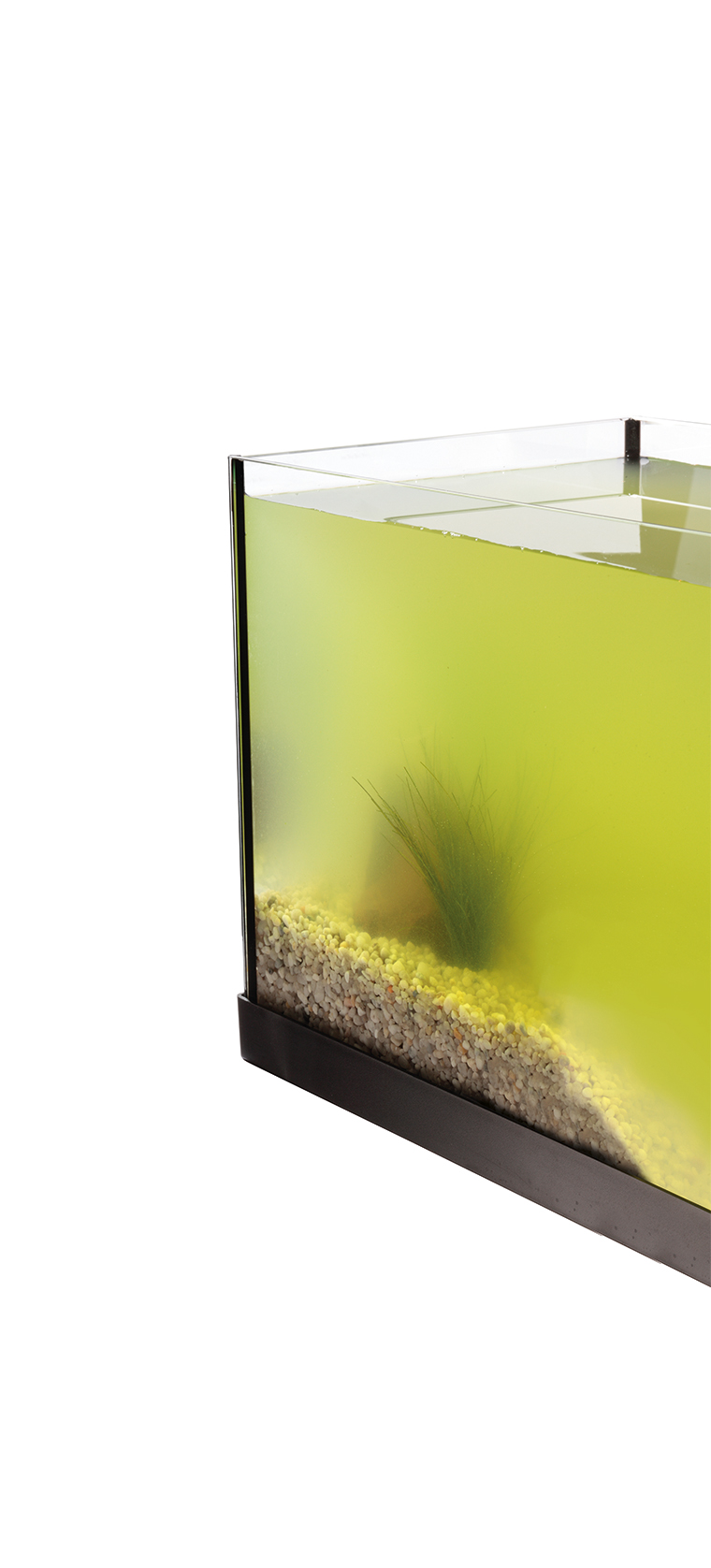 The corner of a glass aquarium filled with green water, obscuring it