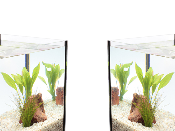 Corner of an aquarium with clear water, plants, rock and gravel.
