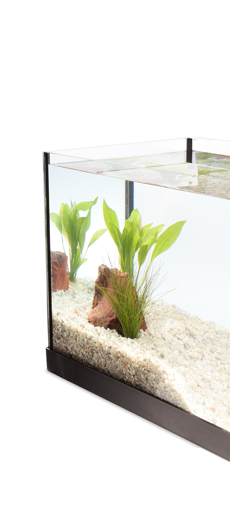 Corner of an aquarium with clear water, plants, rock and gravel.`