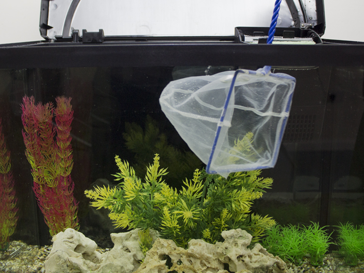 White net with a blue handle moving through an aquarium with colourful plants
