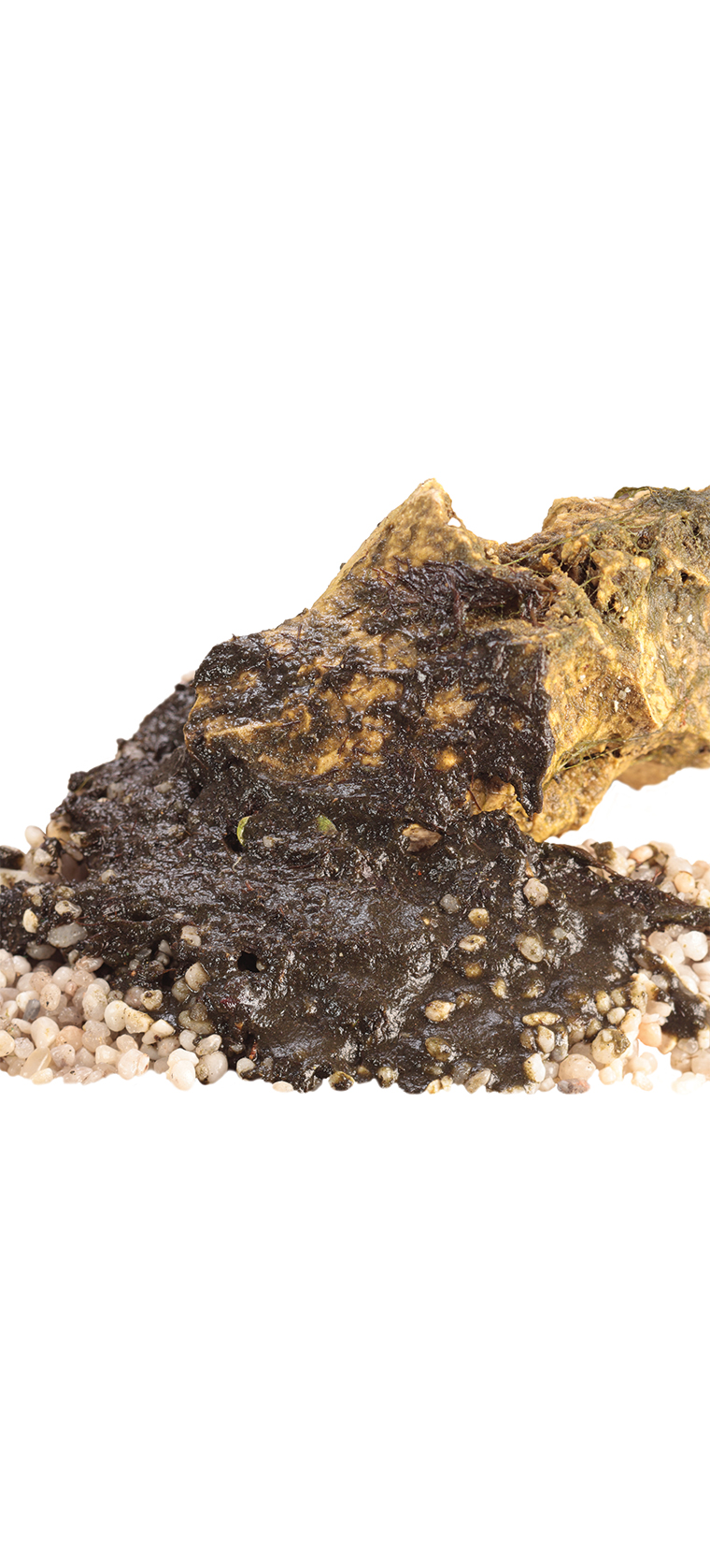 Aquarium rock and gravel covered in brown, muddy sludge