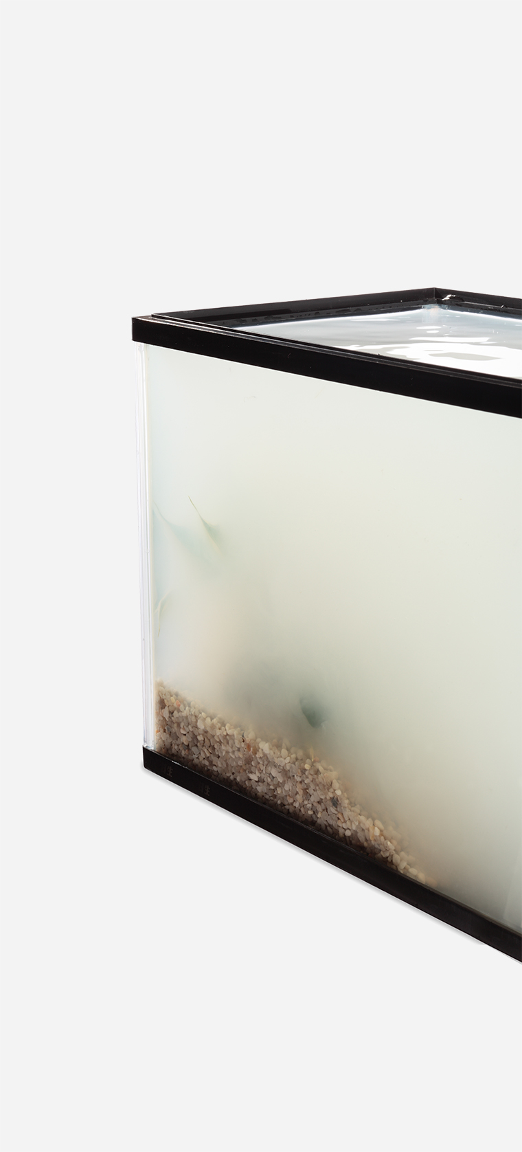 The corner of a glass aquarium filled with cloudy water, obscuring its contents