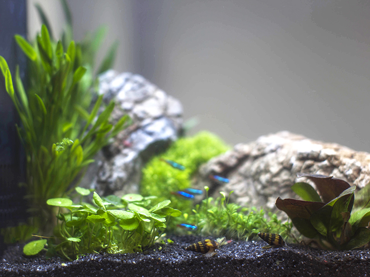 Side video of an aquarium with healthy aquarium plants and livestock