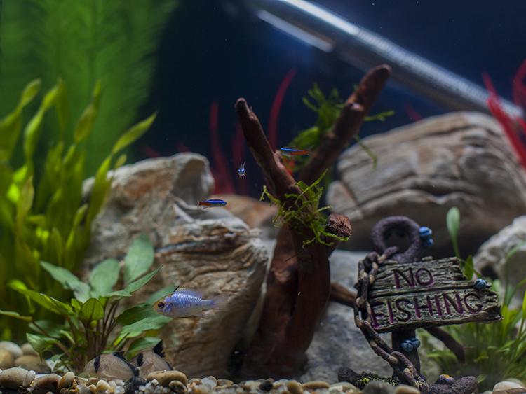Tropical aquarium with plants, fish, gravel and