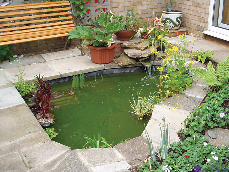 A planted garden pond with fluorescing green water